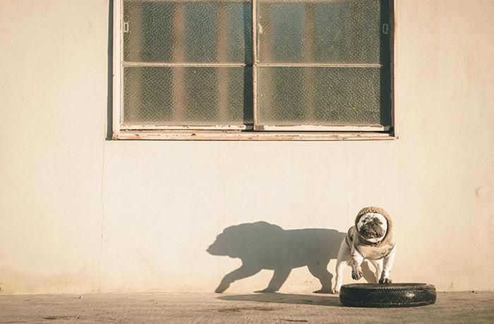 無類のタイヤ好きという「とんくり」くんこと、とんちゃん。壁に映る影が勇ましくて好きな1枚