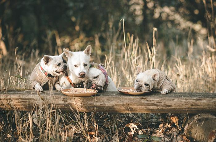 一触即発お菓子パーティ。基本的に仲良し同士の犬たち。でも食べ物が絡むと話は別とか