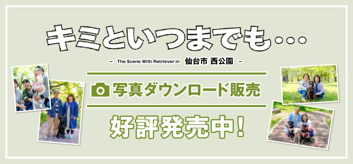キミといつまでも「仙台市 西公園」・・・写真ダウンロード販売